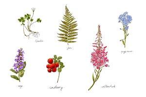 Handdrawn herbs