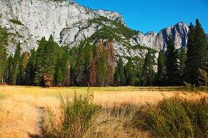 Dense yellow grass in a mountain