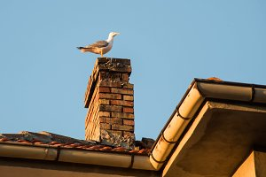 Seagull on pipe on the house roof in