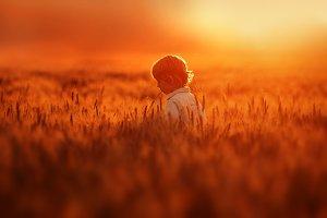 Little boy walks in the field