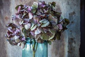 Hydrangea in purple and green