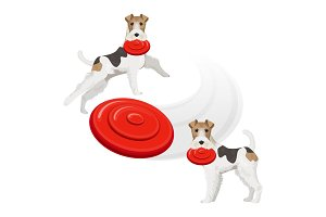 Funny fox terrier dog with red