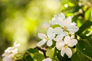 Floral spring gentle background