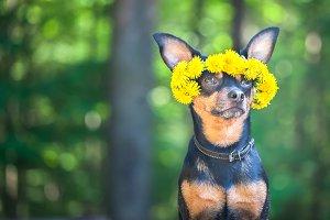 Сute puppy, a dog in a wreath
