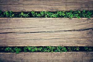 Wooden planks with plants peeking th