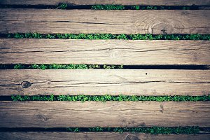Wooden platform and little plants pe