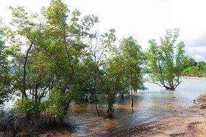 Mangrove forest on Phuket island of