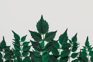Decorative Forest treeline made of g