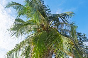 Palm leaves in front of sky
