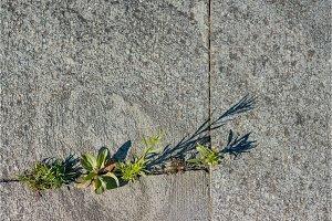 Granite cobblestones with grass and