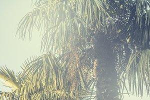 vintage toned tropic rainforest palm