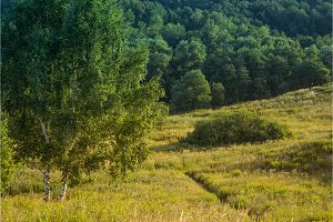 two birch trees on a meadow against