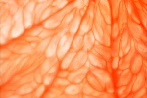 Grapefruit. Close-up macro. So fresh