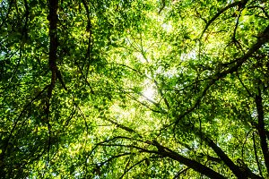Green Leafy Natural Background