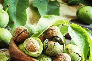 Fresh walnuts in a green shell with