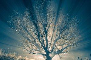 night tree with fog