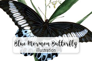 Bugs: Red-Spotted Purple Butterfly