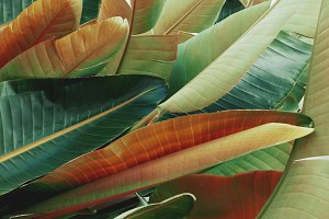 Tropical Leaves in Orange and Green