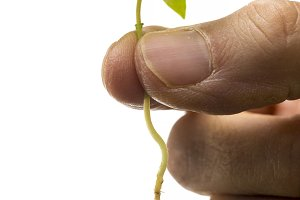 man's hand holding a small plant. Is