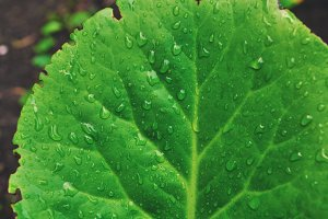 green leaf after rain macro