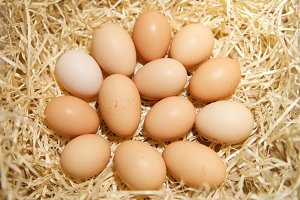 Organic eggs in the nest