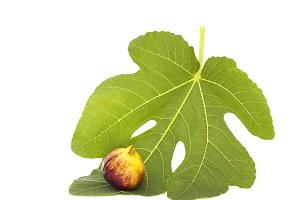 Martineca Rimada Fig on leaf