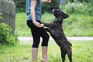 The child to train the dog
