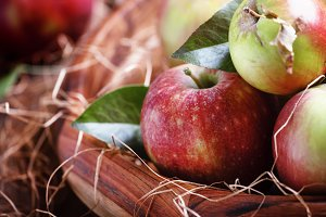 Fresh harvest of autumn sweet apples