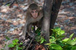 A cute monkey lives in a natural for