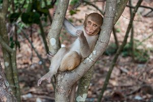 A cute monkey sits on a branch, chew