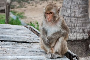A cute monkey sitting with a serious