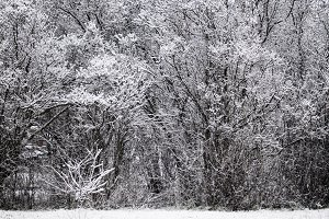 Winter landscape, first snow on tree