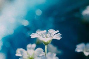 White little flower