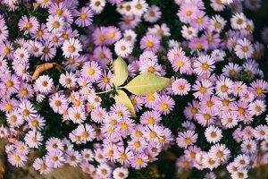 One leaf on flowers
