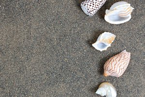Clean beach sand with seashells