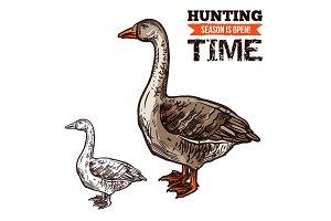 Goose wild bird sketch