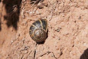 snail stuck