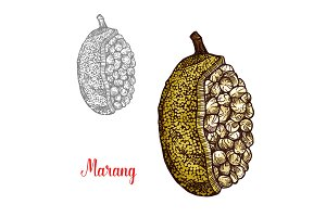 Marang, terap or johey oak fruit