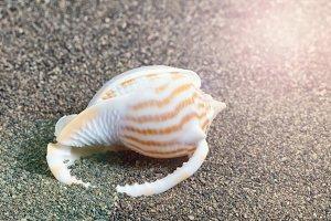 Seashell on beach with sunlight