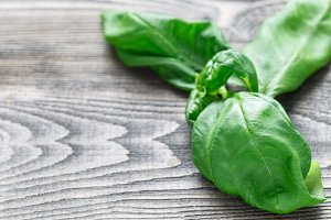 Fresh basil leaves on a gray wooden