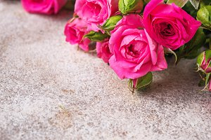 Pink roses on light background