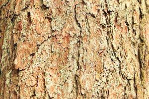 Brown Tree Bark Background Texture