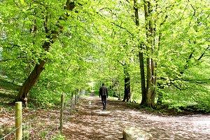 Man and his dog woodland walk