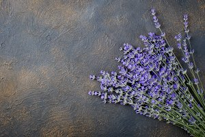 Fresh lavender on dark background