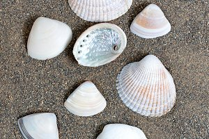 Various seashells on beach sand