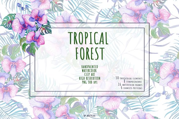 Tropical Forest Watercolor Set in Illustrations