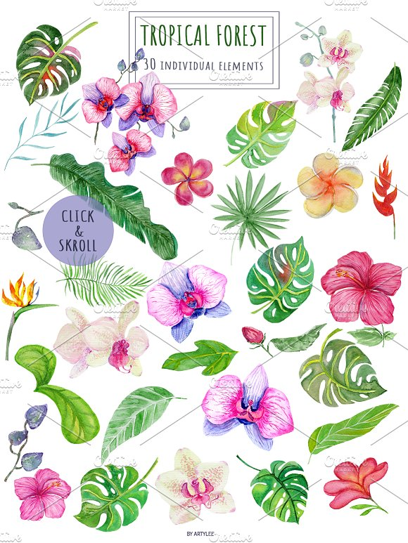 Tropical Forest Watercolor Set in Illustrations - product preview 1