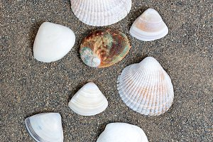 Assortment of seashells on beach