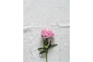 peony flower on white tablecloth