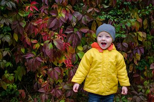 Little boy in the autumn park